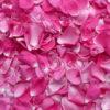 petalos-rosas-casita-de-azucar